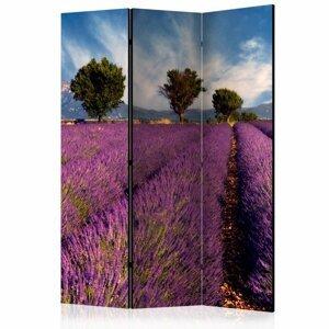 Paraván Lavender field in Provence, France Dekorhome