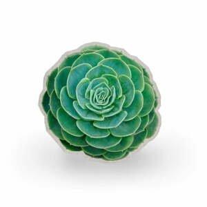 Vankúš z mikrovlákna Surdic Raso Suculenta Verde, ⌀ 45 cm