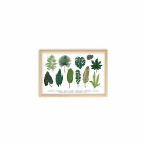 Obraz Surdic Leafes Guide, 50×70 cm