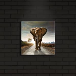 Podsvietený obraz Elephant, 28×28 cm