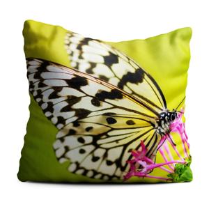 Zelený polštář Oyo home Butterfly, 40x40cm
