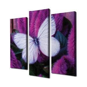3-dielny nástenný obraz na plátne Butterfly