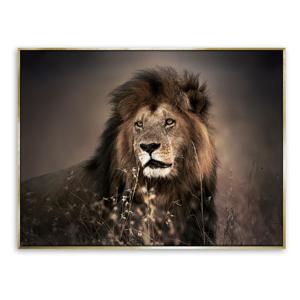 Obraz lva na plátne Styler Golden Lion, 62 x 82 cm