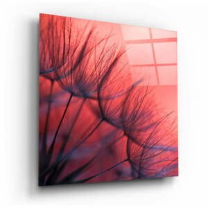 Sklenený obraz Insigne Rosy Dandelion, 100 x 100 cm