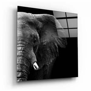 Sklenený obraz Insigne Elephant, 100 x 100 cm