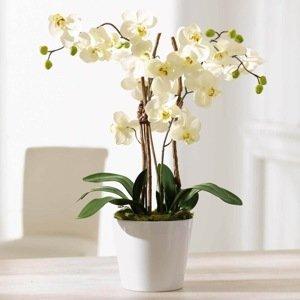Umelá orchidea Elegance