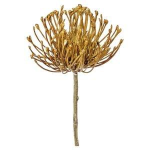 Dekoračná Rastlina Protea, 48cm