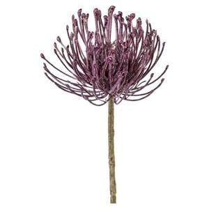 Dekoračná Rastliny Protea, 48cm