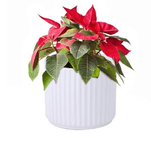Hlinený kvetináč, biela matná, KELSO TYP 2